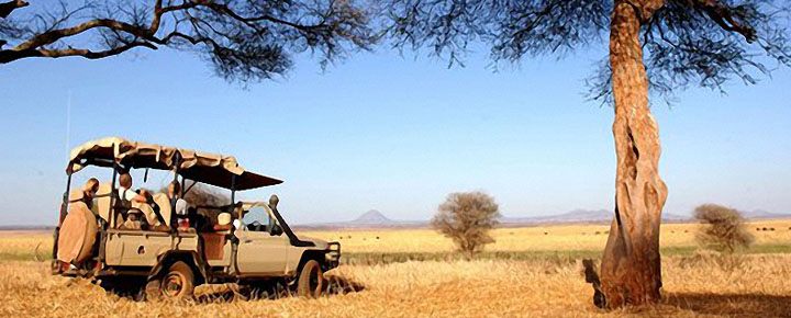 safari, savana